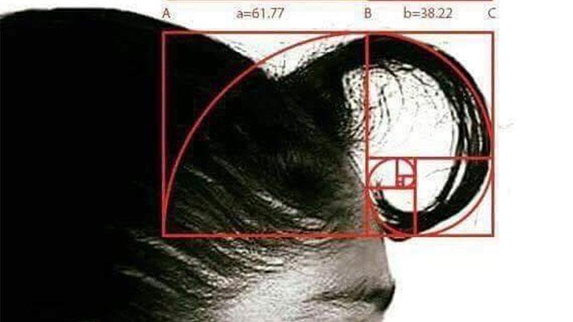 ¡Hazte a un lado Fibonacci! Descubren que el punto áureo surgió del copete de tu mamá