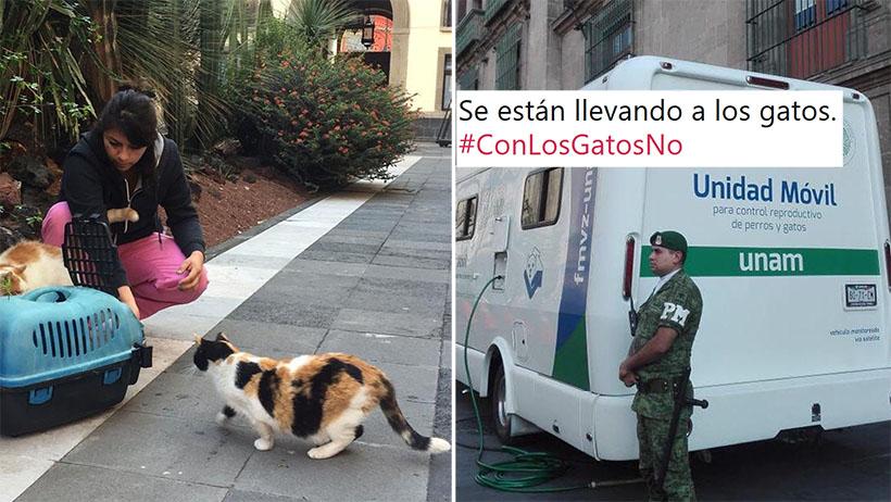 Todo lo que sabemos sobre el terrible desalojo de gatitos de Palacio Nacional