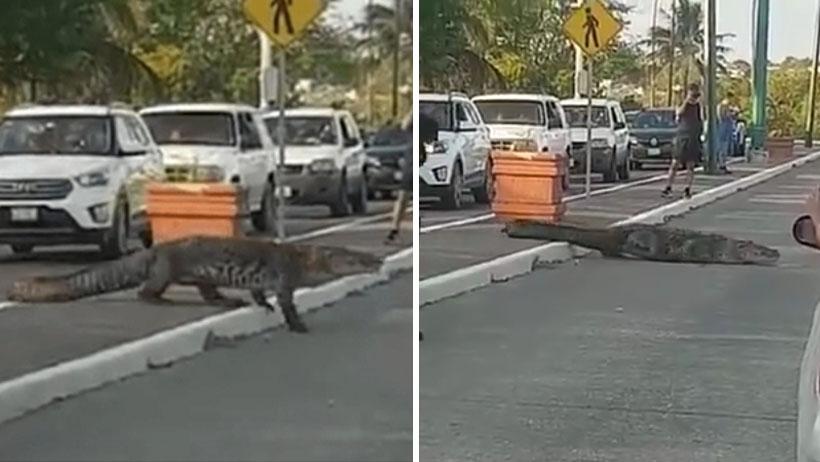 Y en noticias más amables: policías paran el tránsito porque ahí viene el cocodrilo Juancho