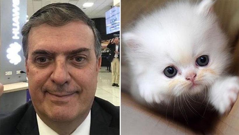 Ebrard llevará a gatitos con ojos grandes para persuadir a Trump