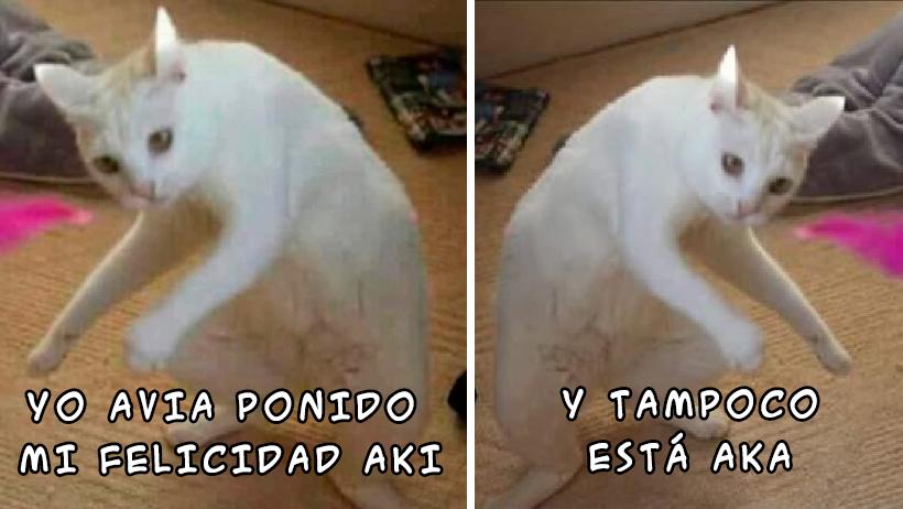 Aki ponimos estos 16 memes del gatito olvidadizo para que te acuerdes dónde dejaste tus cosas