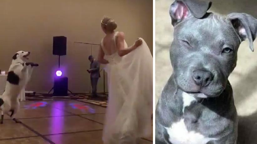 Clásico que sacas a bailar al perro en tu boda y baila mejor que tu marido