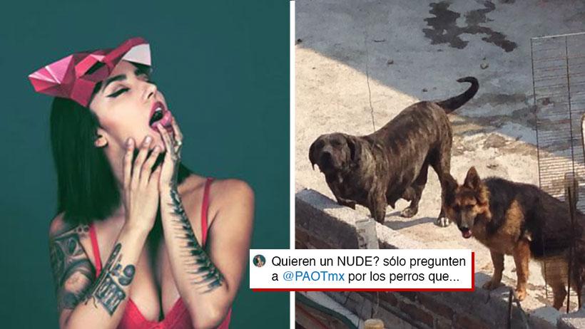 Esta modelo mandó fotos NOPOR a cambio de que le ayudaran a salvar perritos