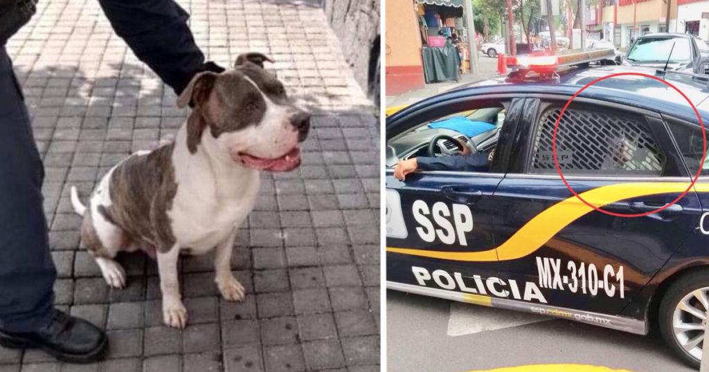 Clásico que la policía de la CDMX te secuestra a tu perro y hasta te pide rescate para no echárselo