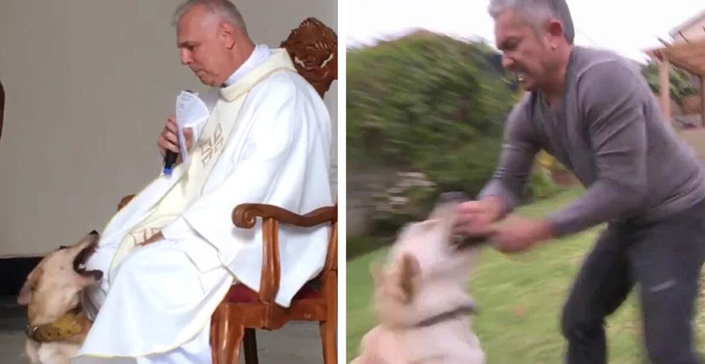 El momento exacto en que este perrito satánico muerde al padre en plena misa