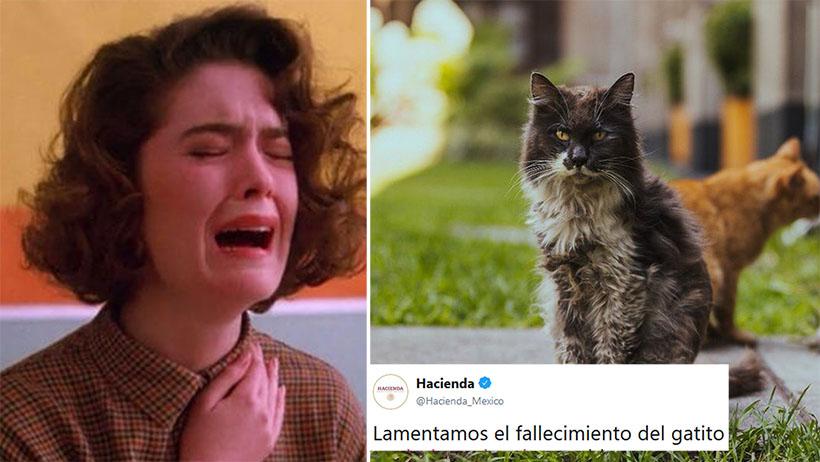 El Gandalla, gatito de Palacio Nacional, se nos fue al cielo y el internet está inconsolable