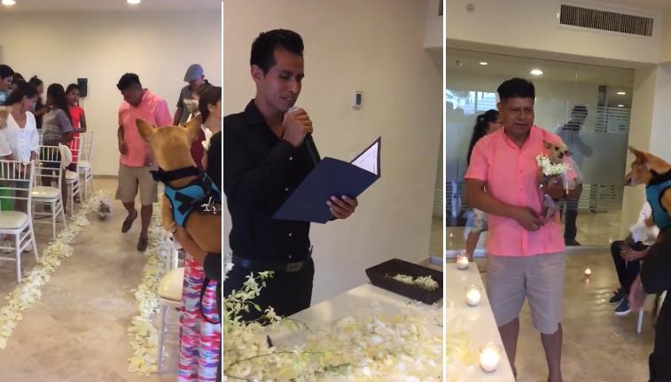 Se acerca un nuevo diluvio: Celebran boda de dos perros en hotel mexicano
