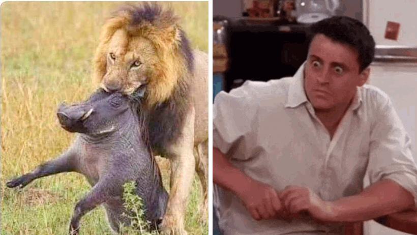 """Retrasan estreno de """"El Rey León"""" debido a problemas entre los actores"""