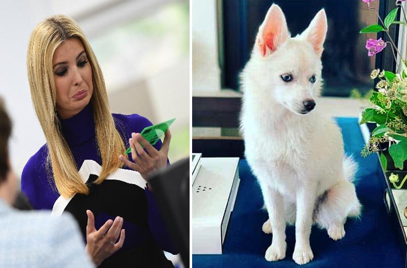 La hija de Trump compró un perro blanco con ojos azules y la tacharon de racista