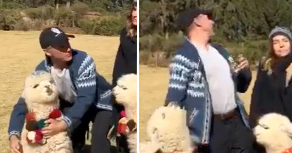 ¡A un lado, Carlos Trejo! Esta alpaca le escupió a Sergio Mayer y vengó a todos los mexicanos