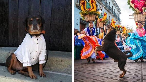 Todo lo que sabemos sobre Mazapán, el perro con guayabera que está conquistando Oaxaca