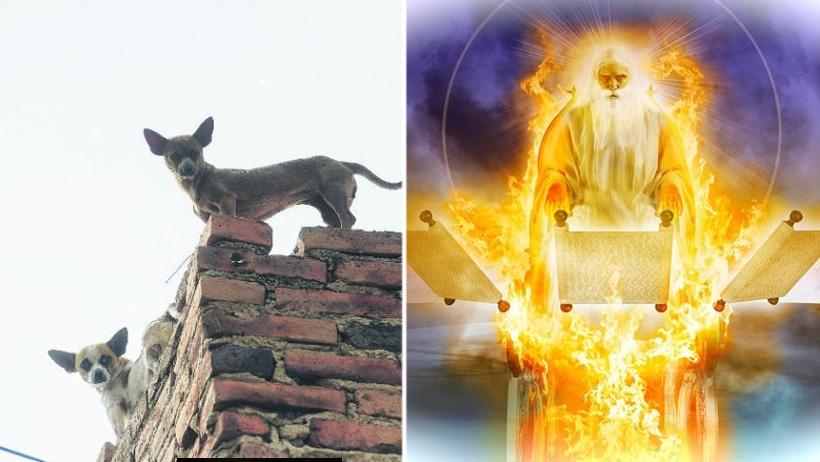 Dios advierte que iniciará el Apocalipsis si siguen dejando a los perritos en la azotea