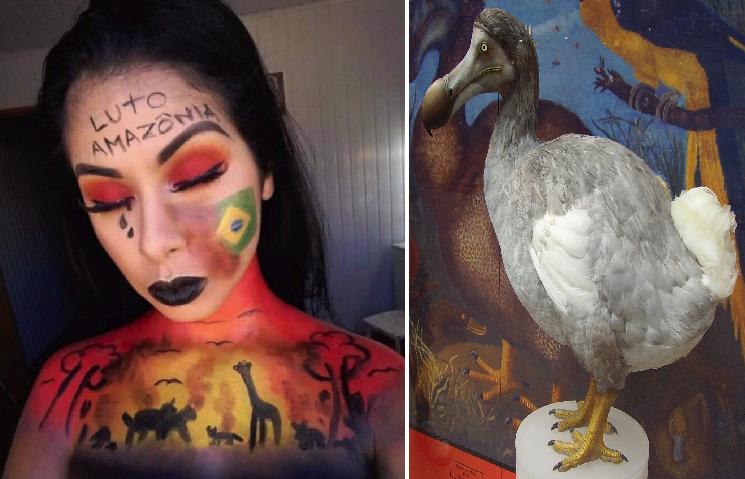 Youtubers se pintarán pájaros dodós en la cara para revivirlos