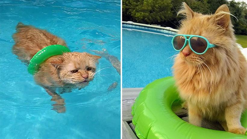 Si te gustó el gato volador, el gato nadador te matará de ternura