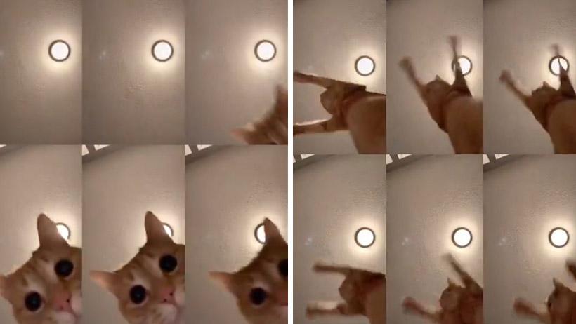 Este challenge de poner a bailar a tu gatito está matando de risa y ternura al Internet