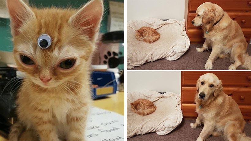 14 tiernos momentos que prueban que los gatos en realidad son dioses