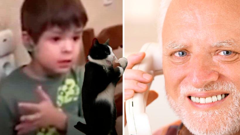 Niños dan lección a adultos sobre gatos.