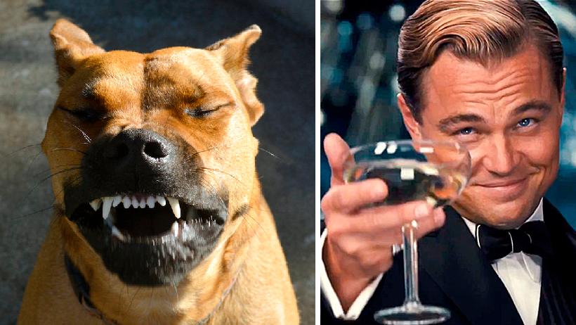 """No decirle """"salud"""" a tu perro cuando estornuda ya es considerado maltrato animal"""