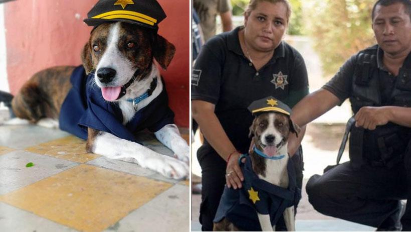Perrito alfa nivel: era callejero y ahora ya se graduó como perro policía