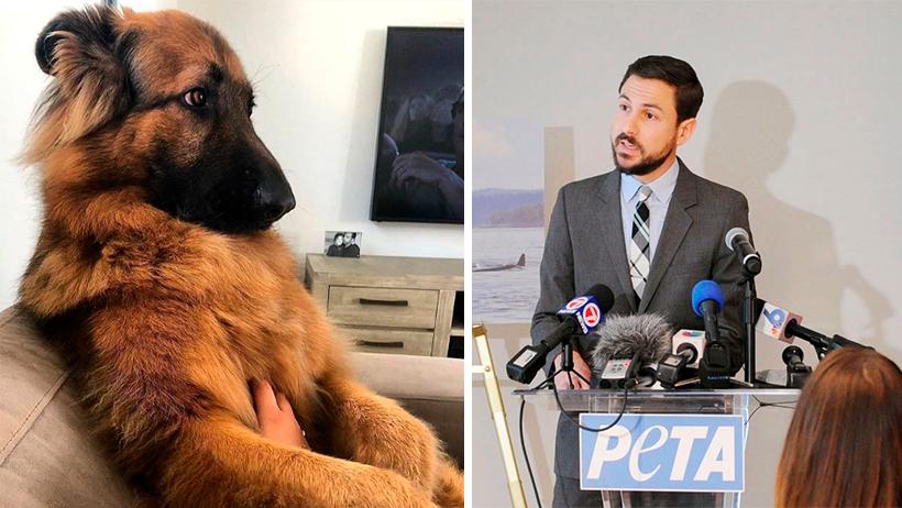 """Se considerará como maltrato animal no decirle """"salud"""" a los perritos luego de estornudar"""