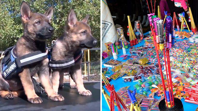 Perritos policía confiscan 34 toneladas de cuetes para que no los asusten el 15 de Septiembre