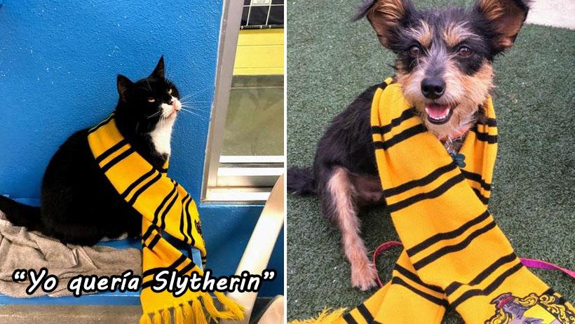 Genios: existe un Hogwarts para perros y gatos y los millennials enloquecieron de amor