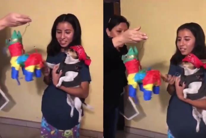 Momento exacto en el que hacen una piñata para un perro y la humanidad queda condenada para siempre