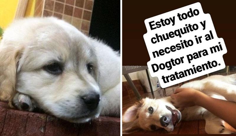Conoce a Scott, el perrito que vende marcadores para comprar sus medicinas
