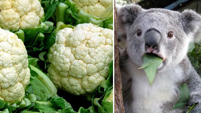 Dice la ciencia que ya le bajes a tu veganismo o te va a dar un soponcio cerebrovascular
