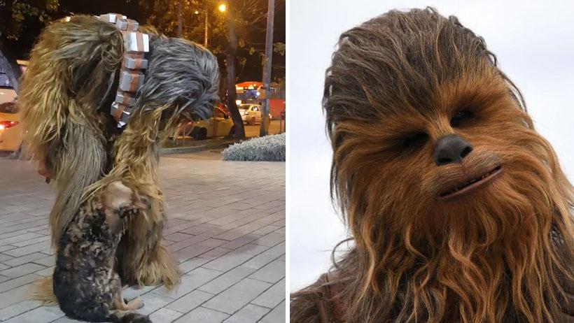 Momento exacto en que Chewbacca se convierte en el héroe de este perrito