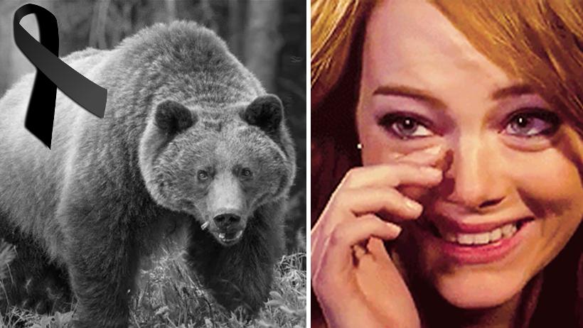 Científicos declaran oficialmente la extinción del oso que hice presumiéndote