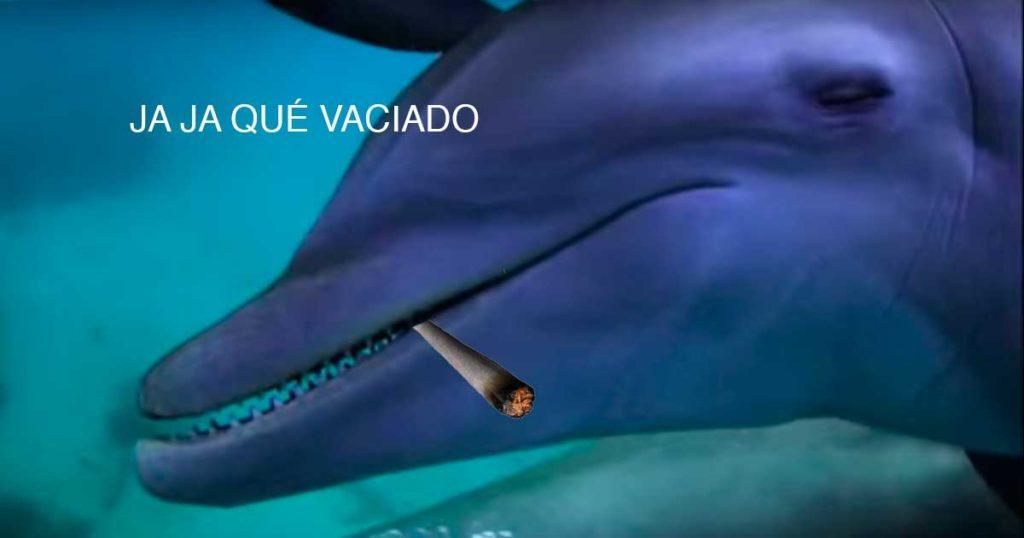 Drogarse es de marihua… ¡Captan a delfines poniéndose hasta atrás con veneno de pez globo!