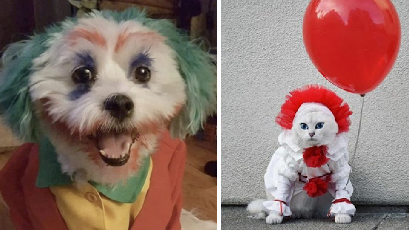 Los mejores 17 disfraces que tu mascota podría lucir este Halloween
