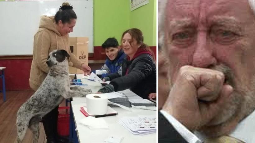 ¿Qué tan provincia están tus noticias? Pues perro emite el primer voto canino de la historia