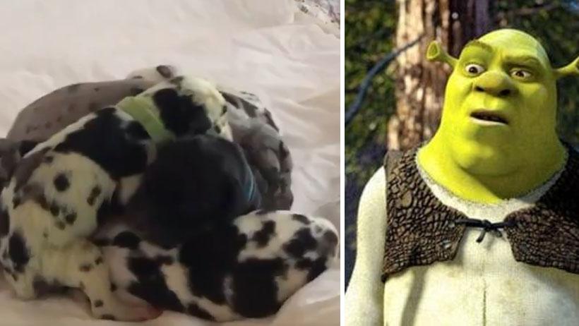Perrito único y detergente nivel: Nace de color verde y marca nueva tendencia
