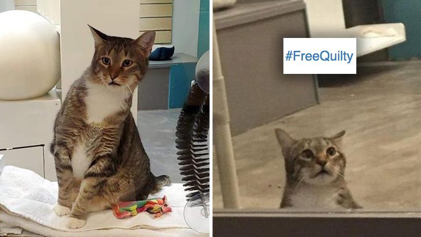 Estos desgraciados dejaron a un gato en aislamiento y el internet pide su liberación