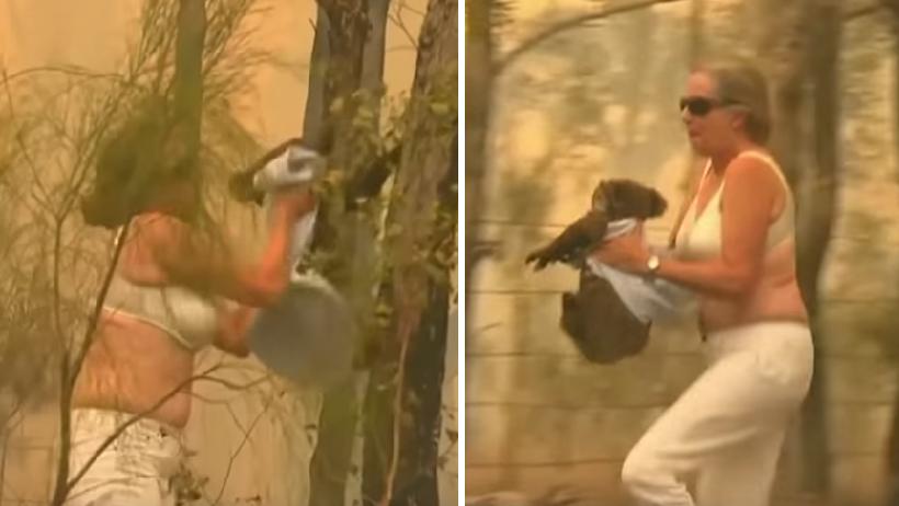 Koala es salvado por mujer.