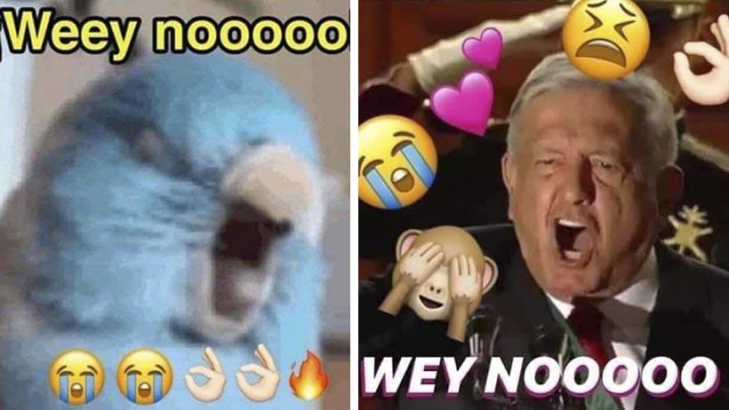 Los mejores memes del Wey nooo