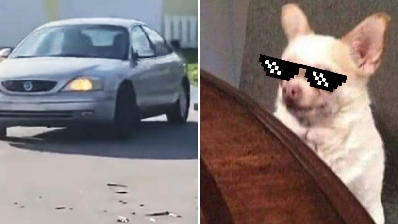 Clásico que tu perrhijo es tan rebelde que hasta conduce tu auto sin permiso