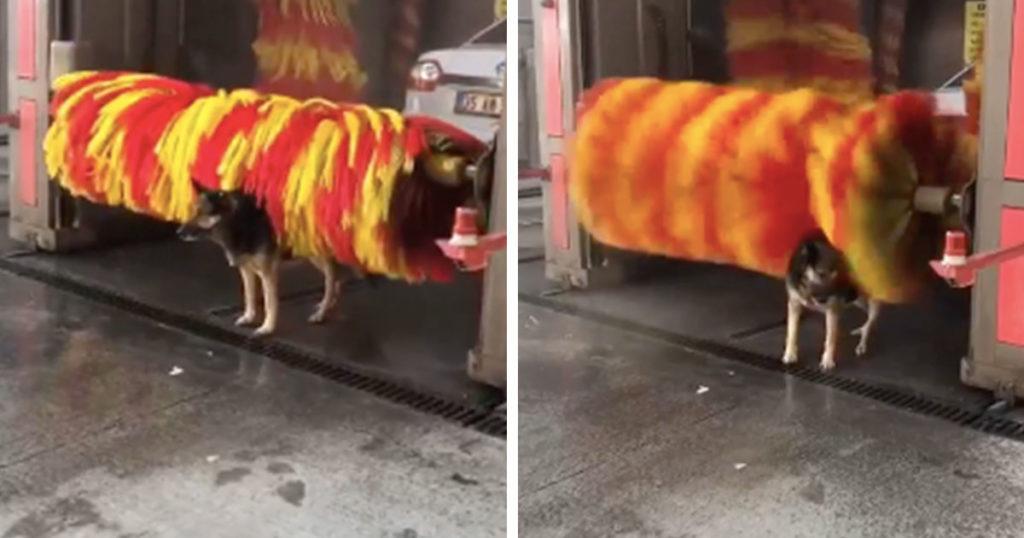 Este perrito nos demuestra que aunque seas otaku o metalero, te puedes dar un baño gratis (VIDEO)