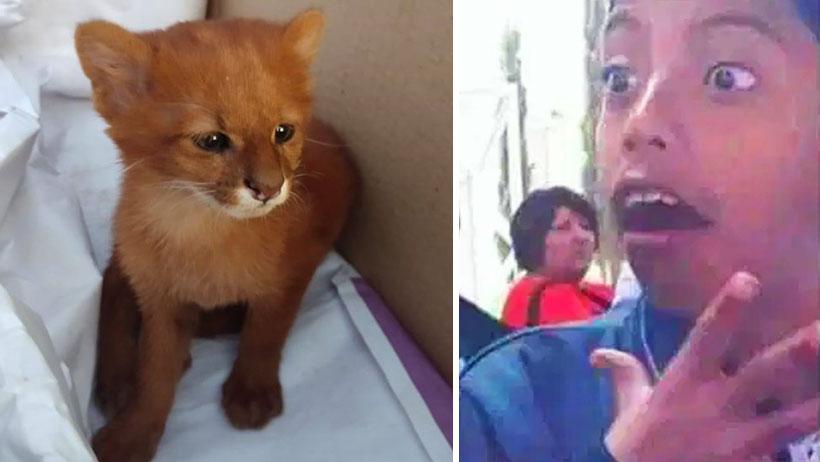 Típico que rescatas y adoptas a un lindo gatito pero resulta ser un puma