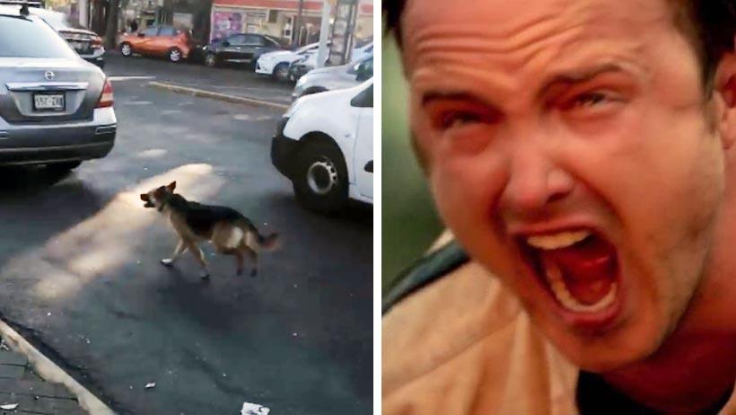 Abandonan a perro en las calles de Coyoacán