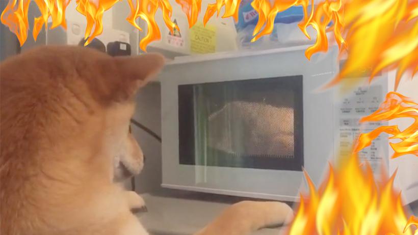 Nos da el patatús nivel: Este tierno perro provocó un incendio al usar el microondas
