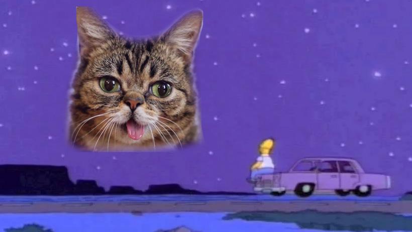 ¡Ay no por favor, no me digas esto! Adiós a Lil Bub, se nos fue al cielo de los gatos
