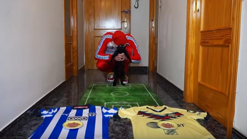 Una gata ya dijo quién ganará ede Monterrey vs América.