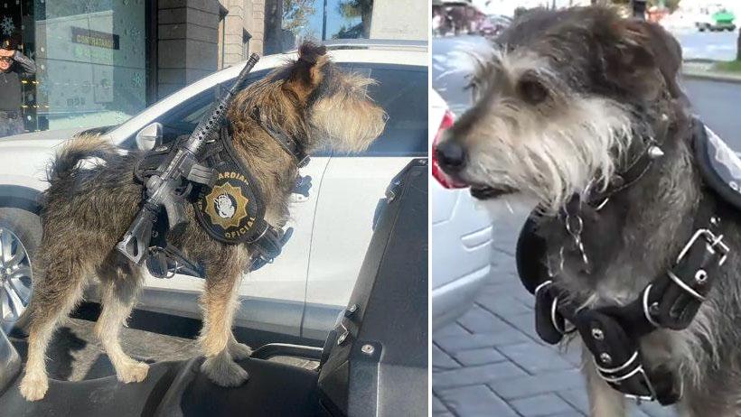 ¡A un lado, perros policía! este perro guardián de panadería es el verdadero alfa