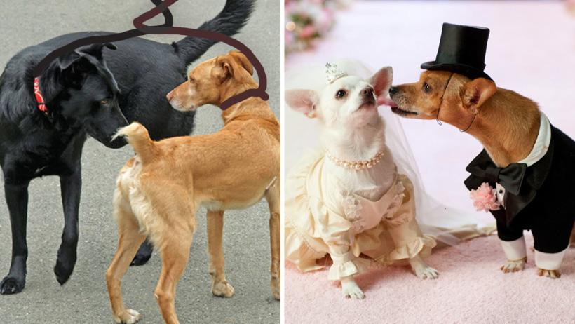Perros que enreden sus correas por olerse tendrán que casarse: Puebla