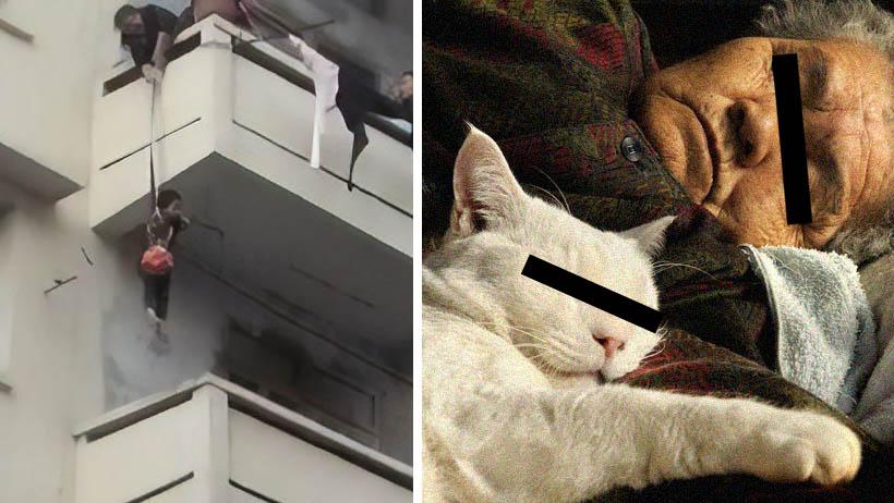 Abuela salva a gato poniendo en peligro a nieto