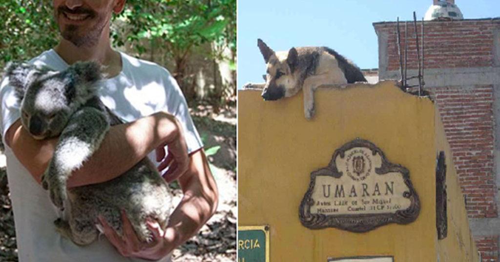 Persona que tiene a su perro en la azotea, se dijo listo para ir a rescatar koalas en Australia