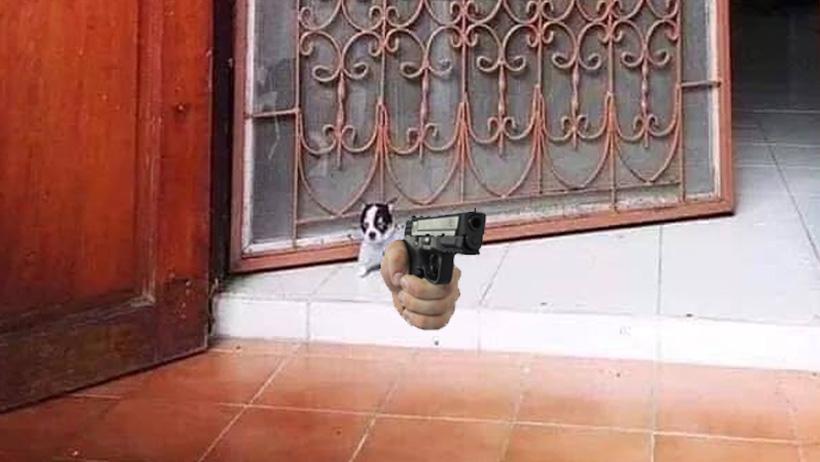 Chihuahuas guardianes podrán portar armas para resguardar tu seguridad: Gobierno